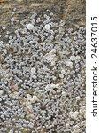 set of sea animals   barnacle... | Shutterstock . vector #24637015