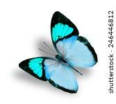 beautiful flying fancy light... | Shutterstock . vector #246446812