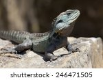 eastern water dragon ... | Shutterstock . vector #246471505