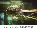 Young Turtle Sitting On Branch...