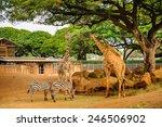 Giraffes Zoo  - Fine Art prints