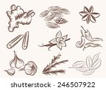 natural spices set of vector... | Shutterstock .eps vector #246507922