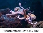 octopus in water  | Shutterstock . vector #246512482