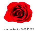 red rose on white background. | Shutterstock . vector #246549322