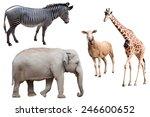 a zebra  elephant  sheep and...   Shutterstock . vector #246600652