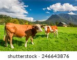 cows on pasture in the alps | Shutterstock . vector #246643876