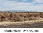 Roadside Tangle Of Winter Dry...