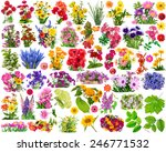 Big Set Of The Isolated Floral...