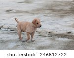 Stock photo puppy dog alone on the street 246812722