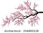 branch of a blossoming cherry... | Shutterstock .eps vector #246883228