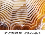 natural brown agate. very large ... | Shutterstock . vector #246906076