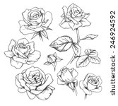 Set Of Hand Drawn Roses.
