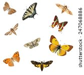 butterflies isolated on the...   Shutterstock . vector #247068886