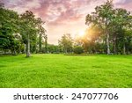 grassland and trees in sunset | Shutterstock . vector #247077706