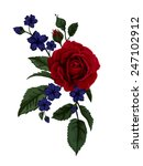 Beautiful Rose Isolated On...