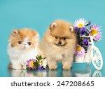 Stock photo  kitten and puppy 247208665