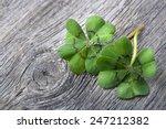 Four Leaf Clover On Grey Woode...