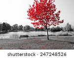 empty park bench under red tree ... | Shutterstock . vector #247248526