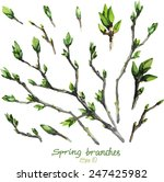 spring buds on the branches... | Shutterstock .eps vector #247425982