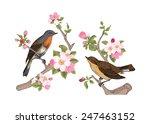 vintage vector spring card.... | Shutterstock .eps vector #247463152
