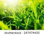 Green Grass Bokeh Background