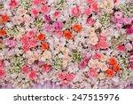 beautiful flowers background... | Shutterstock . vector #247515976