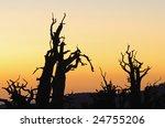 Silhouettes Of Bristlecone...