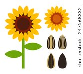 sunflowers and seeds symbol... | Shutterstock .eps vector #247568332