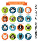 set of flat popular breeds of... | Shutterstock .eps vector #247664122