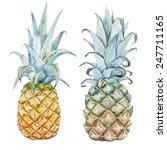 Watercolor  Pineapple  Fruit ...