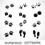 Animal And Human Paw And...