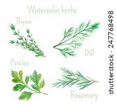 watercolor set of vector... | Shutterstock .eps vector #247768498