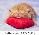 Stock photo cute red little kitten sleeping on the pillow 247775455