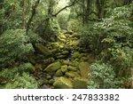Brazil   Jungle View In Mata...