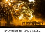 Stock photo  golden light in the stables 247843162