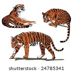 tiger in three poses | Shutterstock .eps vector #24785341
