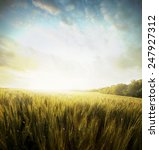 yellow meadow under sky with... | Shutterstock . vector #247927312