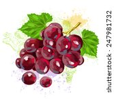 red grapes | Shutterstock .eps vector #247981732
