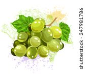 grapes | Shutterstock .eps vector #247981786