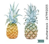 pineapple  watercolor  fruit ... | Shutterstock .eps vector #247992055