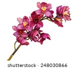 beautiful flower orchid close... | Shutterstock . vector #248030866