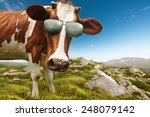 curious cow with sunglasses | Shutterstock . vector #248079142