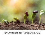 seed root on soil with sunbeam... | Shutterstock . vector #248095732