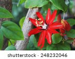 red flower in the forest | Shutterstock . vector #248232046