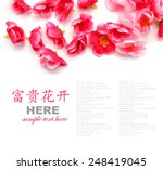 plum flowers  isolated on white ... | Shutterstock . vector #248419045