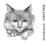 sketch of a cats portrait | Shutterstock . vector #248457808