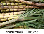 sugar cane | Shutterstock . vector #2484997