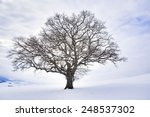 Lonely Winter Tree. Sweet...