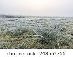 Close Up Of Grass In A...