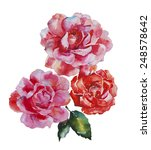 Three Pink And Red Roses...